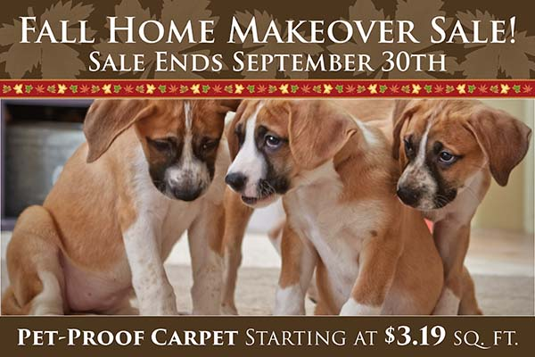 Fall Home Makeover Sale going on now at Neve's Floors To Go & Mattress Gallery! Pet-proof carpet starting at $3.19 sq.ft. Hurry in, sale ends September 30th.